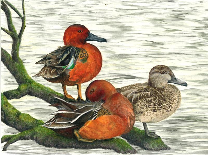 The Winning Artwork From 2016 Tennessee Junior Duck Stamp Contest Will Be Featured On