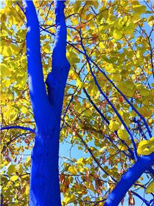 The Blue Trees in Chattanooga