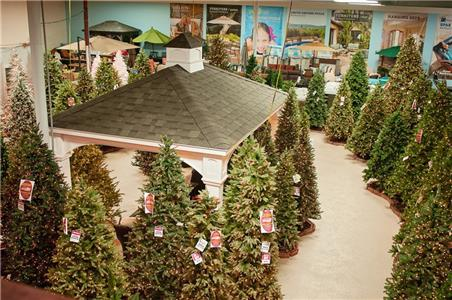 The Great Christmas Shop's Forest of Permanent Trees