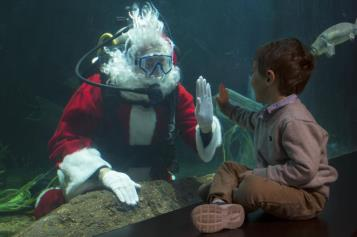 SCUBA Santa will be part of the Tennessee Aquarium Holiday Celebration on Saturdays and Sundays, Nov. 17-Dec. 23