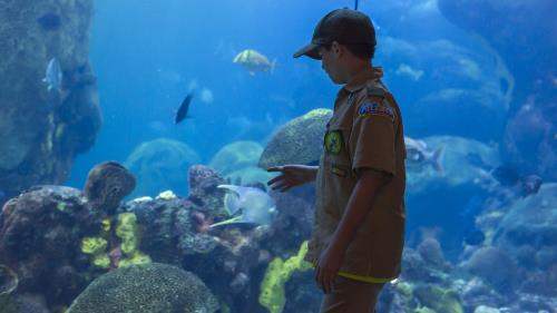 Halloween Imax Frixay 19 2020 Tennessee Aquarium, IMAX Offer Half Off Admission For Scouts In